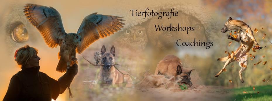Tierfotografie Tanja Brandt