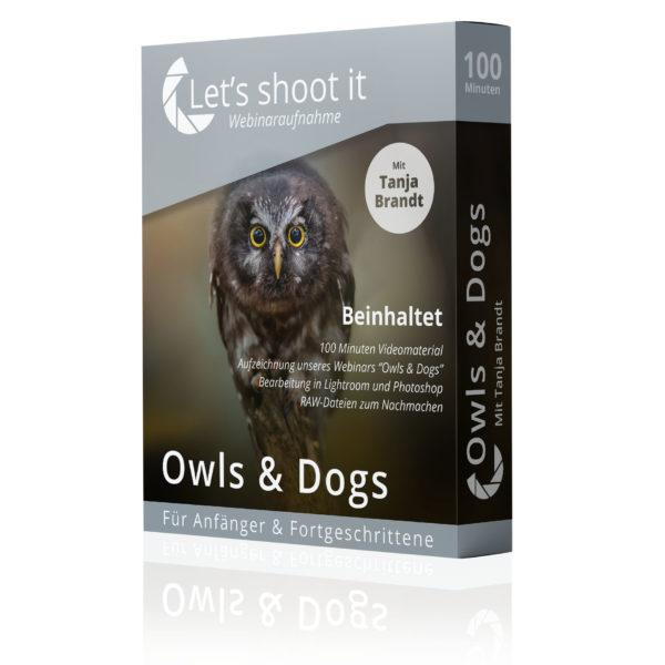 Tierfotografin Tanja zeig im Webinar Owls & Dogs die digitale Bearbeitung von Tierfotos